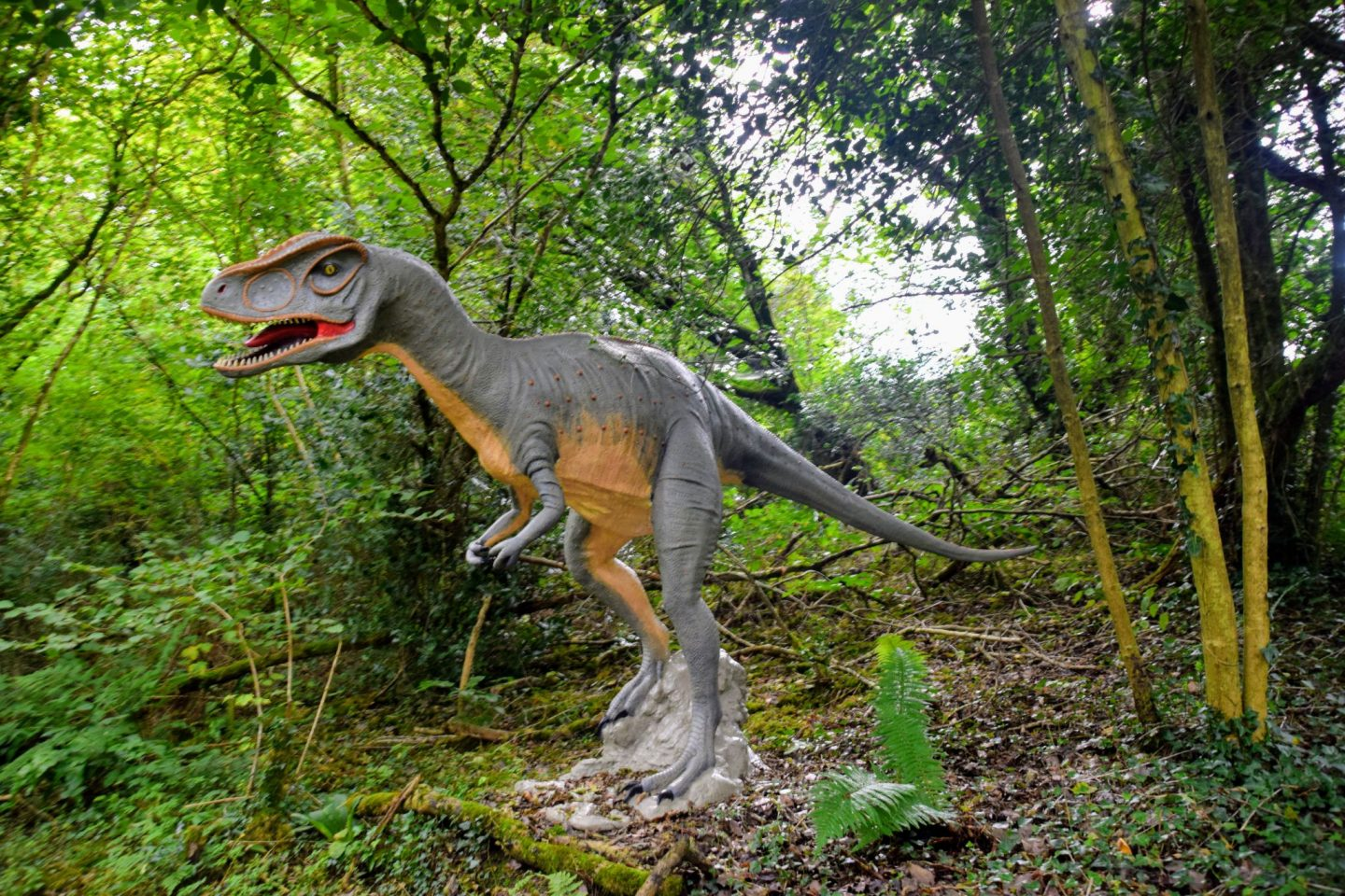 , Days Out:  Snapshots of The Dinosaur Park, Tenby