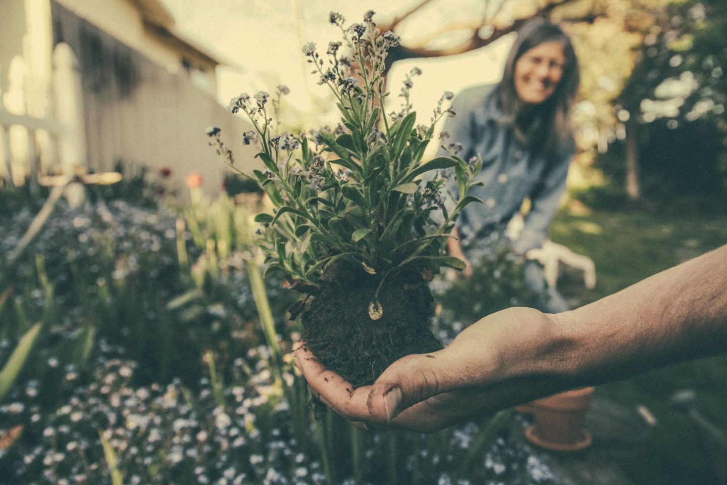 , Home:  Why You Should Hire a Gardener