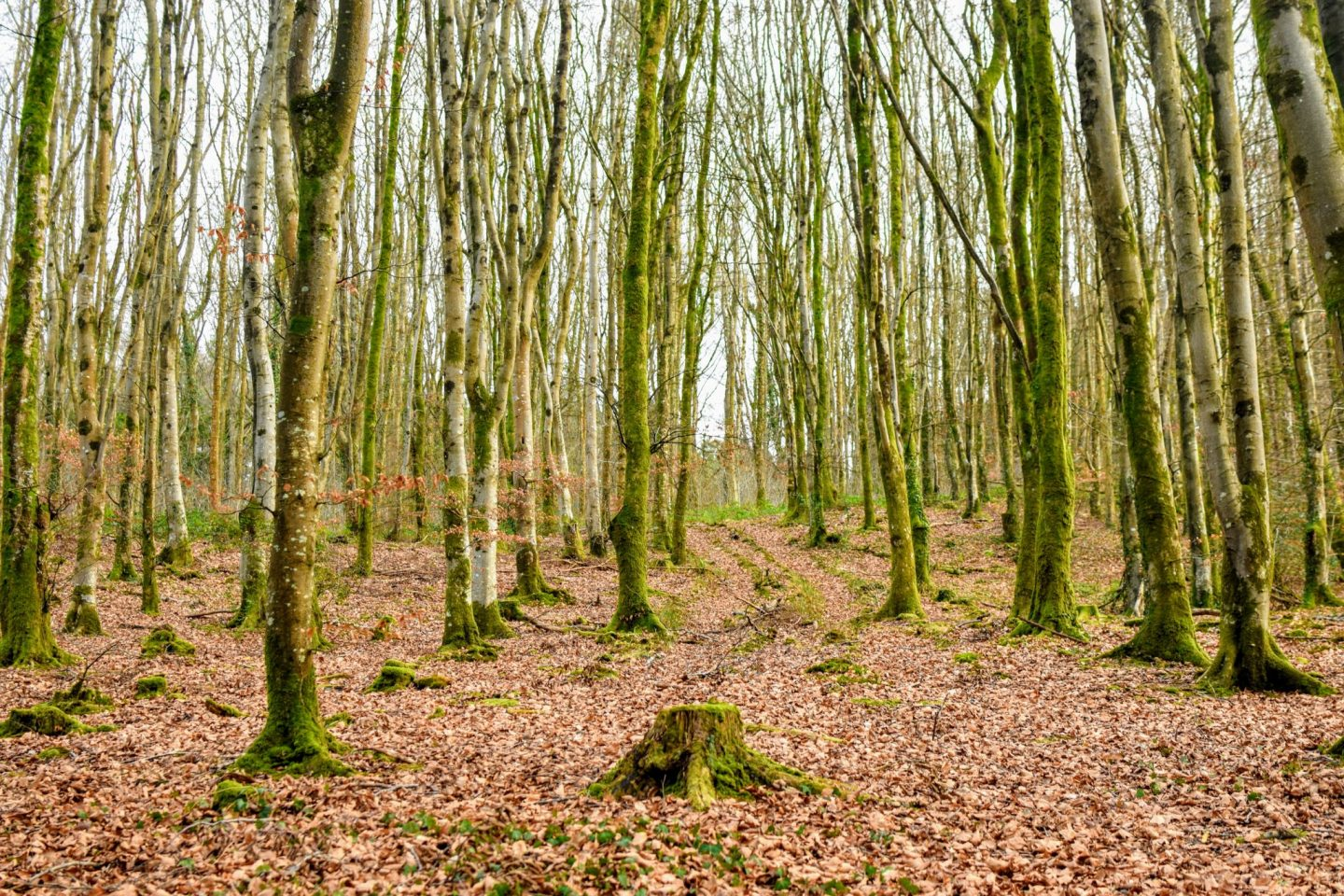 , Ten Essentials for your next Woodland Walk