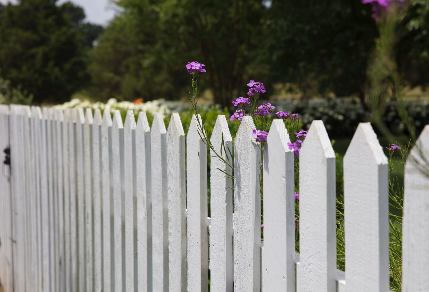 , Home:  Fencing Your Garden