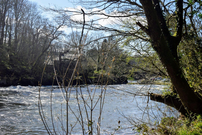 , Snapshots:  Cenarth Falls, Ceredigion, March 2019