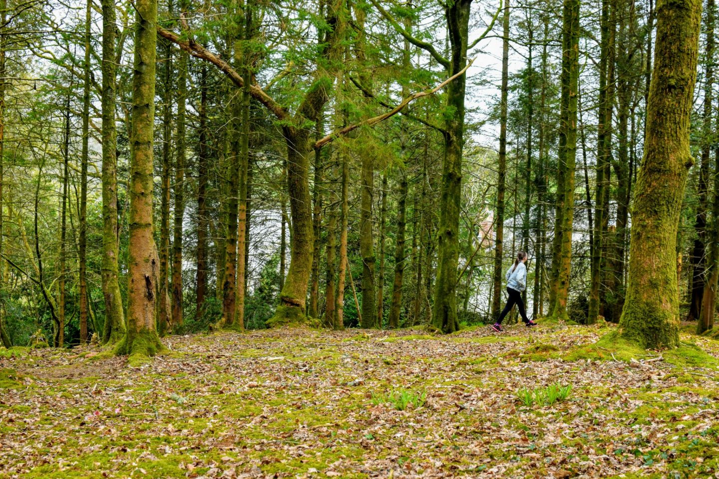 , Exploring Little Milford Woods, Pembrokeshire