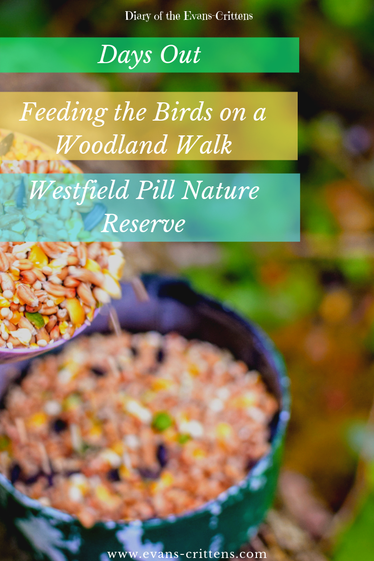 , Feeding the Birds at Westfield Pill Nature Reserve, Neyland Marina