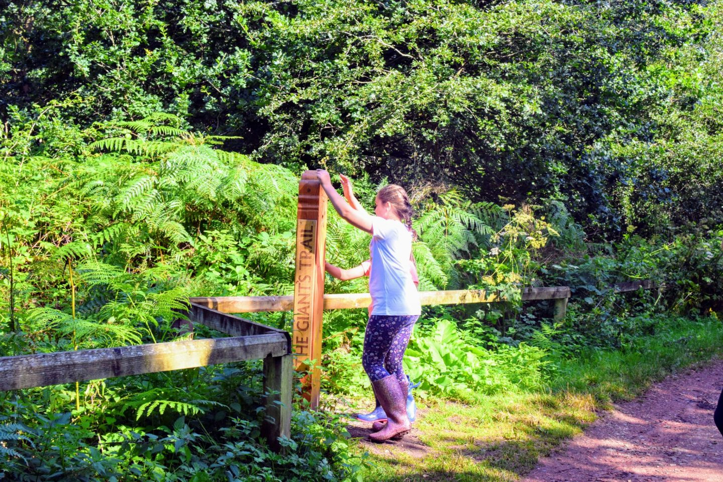 , Visiting Sherwood Forest Nature Reserve and Visitor Centre