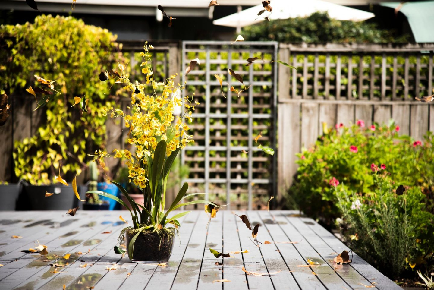 , Planning a Garden That's Always Ready to Enjoy All Year Round