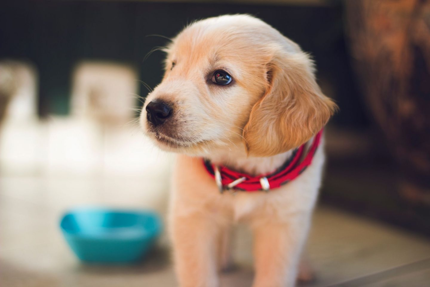, The Practicality of Feeding a Puppy Raw Food