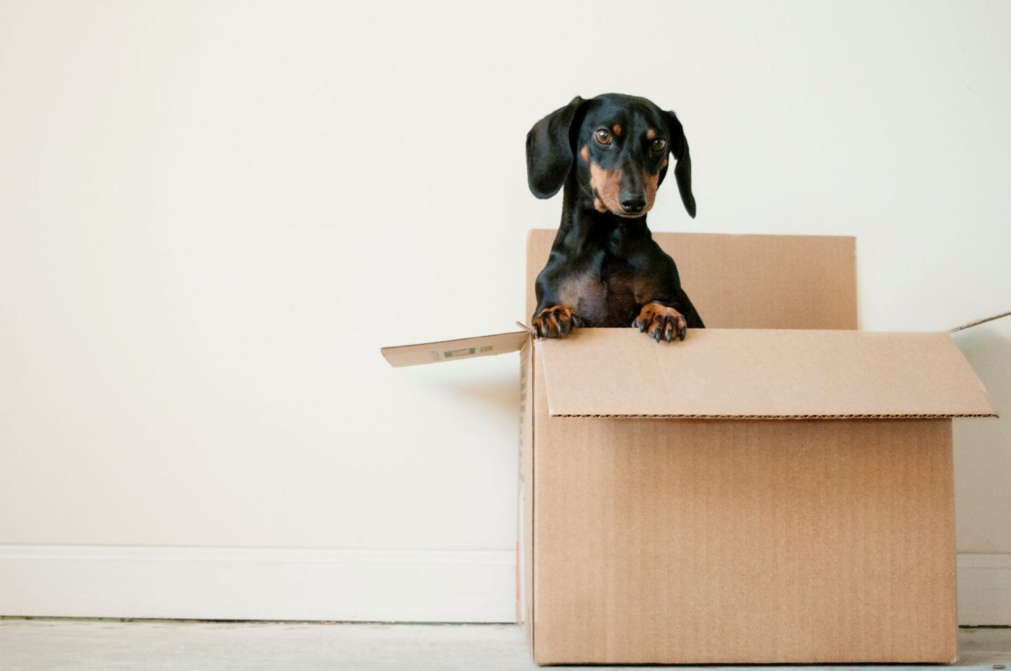 , What You Need to Know About Winter Moving