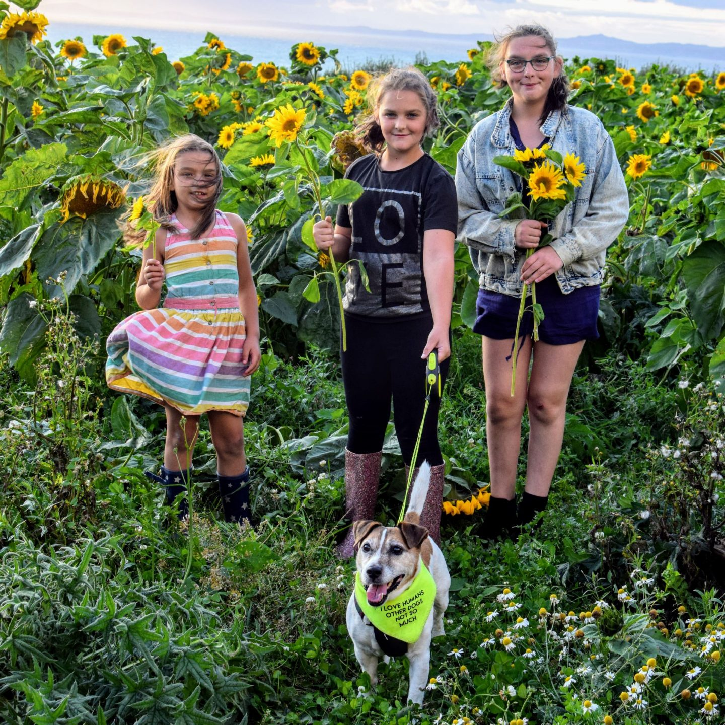 , Snapshots | Sunflower Fields Forever? Mountain Farm, Broad Haven