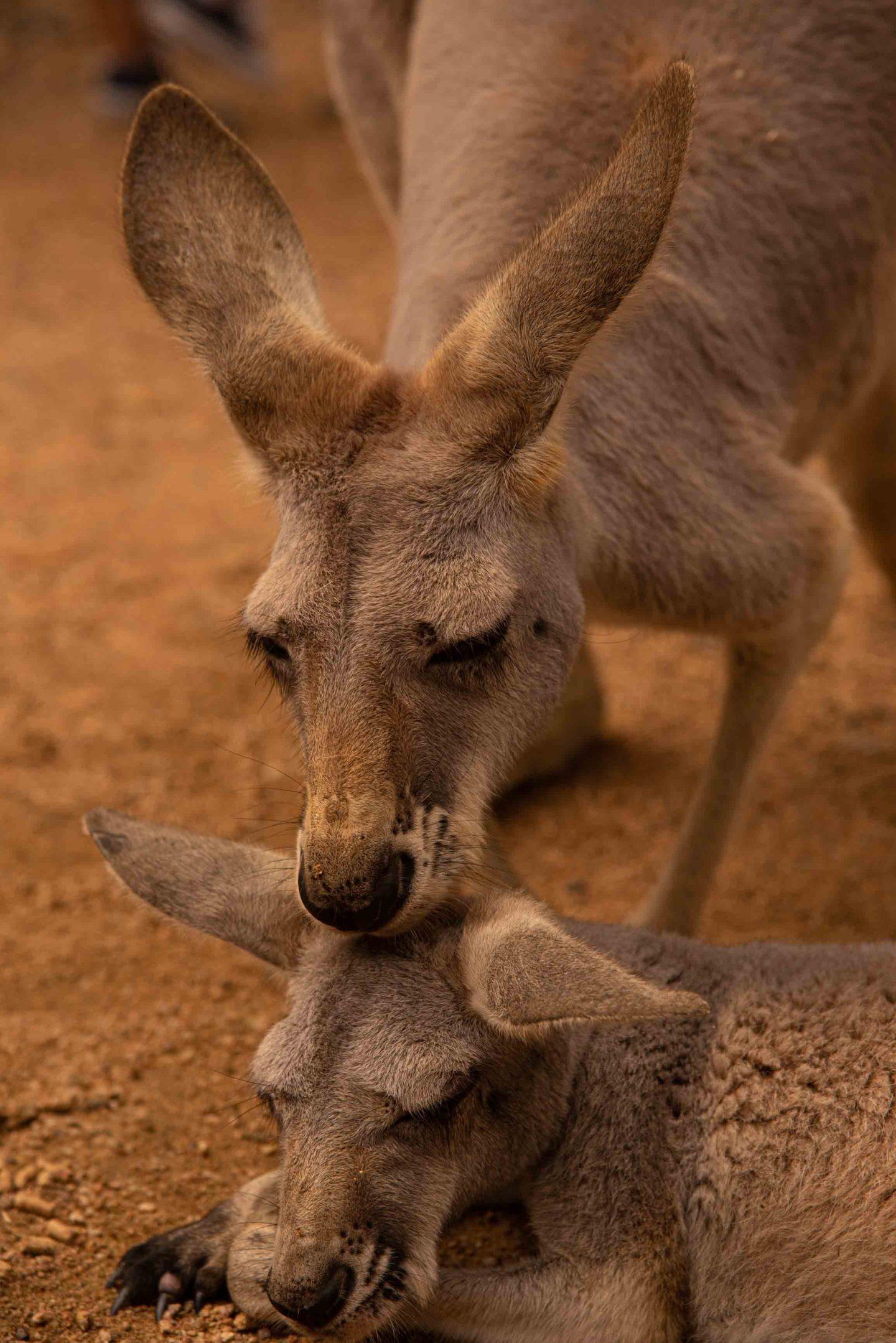 , 5 Wildlife Parks to Visit in Australia