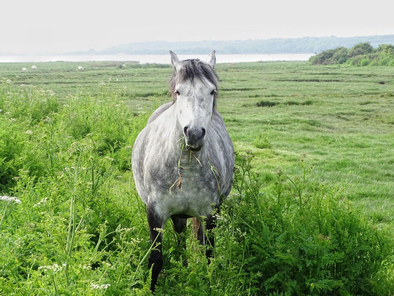 , Travel:  5 Date Ideas in Dorset