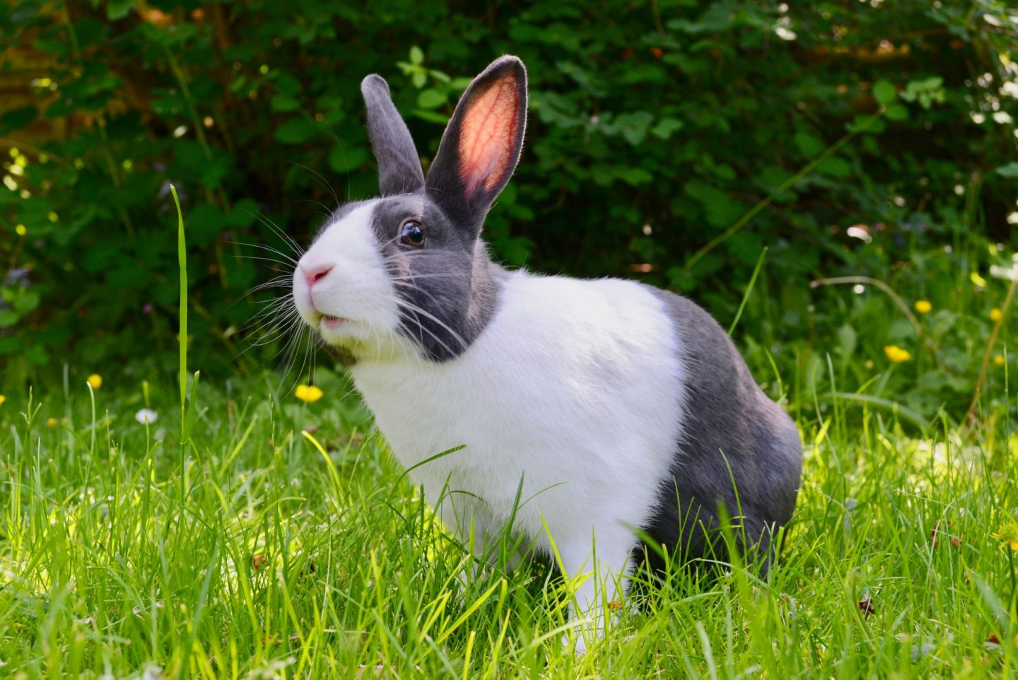 , A Guide To Rabbit Ownership As A Full-Time Parent