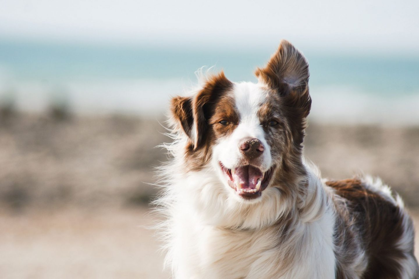 , Top Tips for Ensuring That Your Dog Has a Good Quality of Life