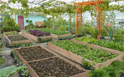 , 3 Must-Haves For Creating Your Dream Garden