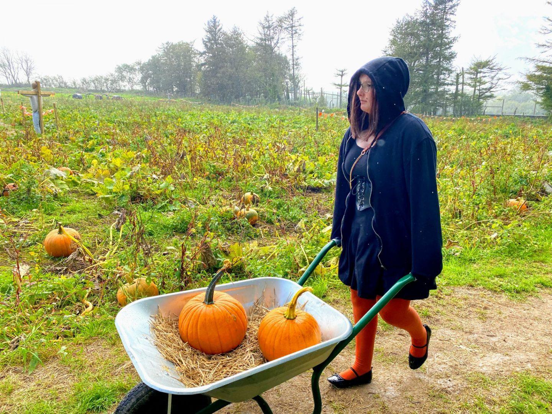, Picking Pumpkins at Heatherton, Pembrokeshire