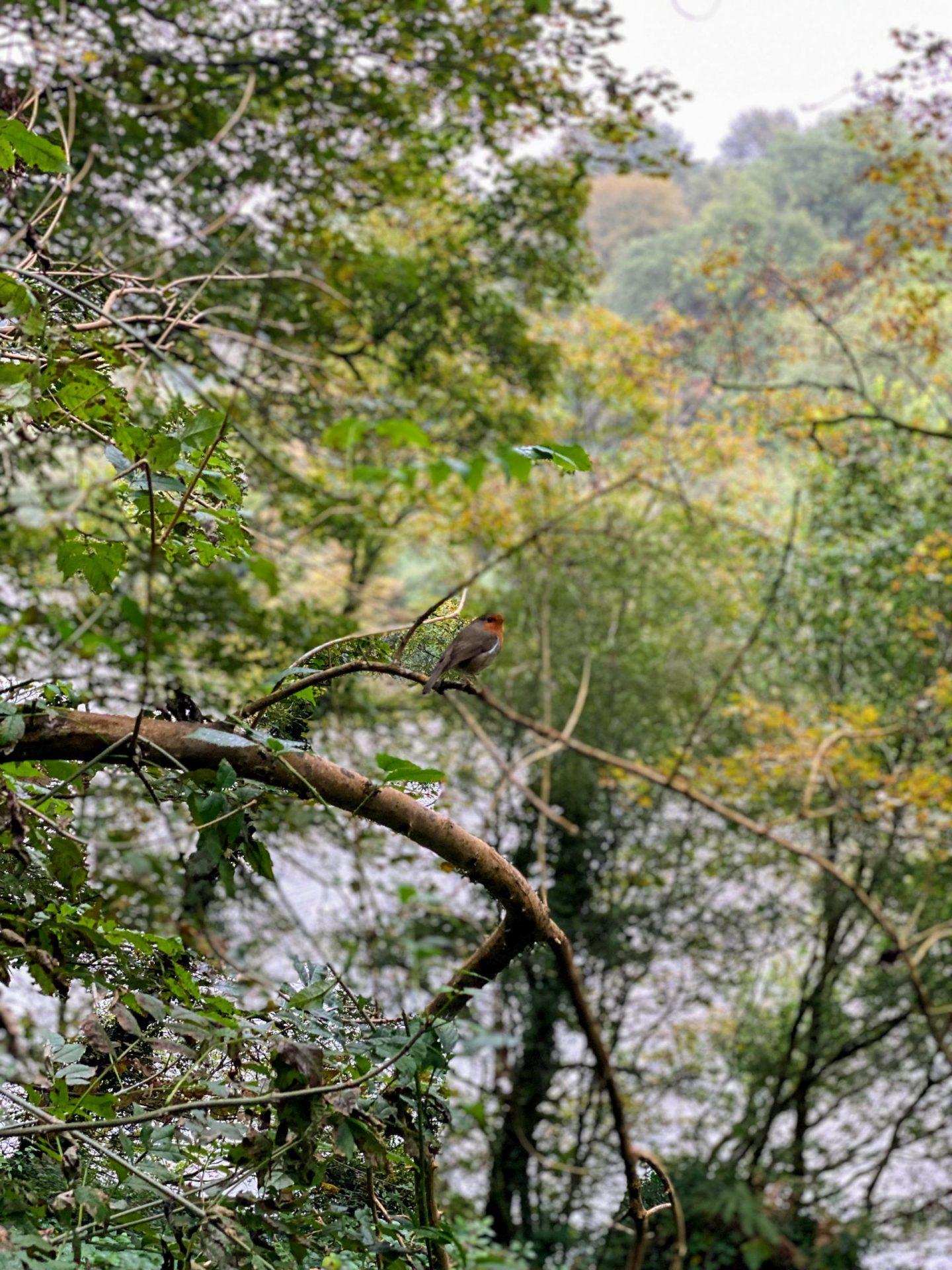 , A Walk Down Goose Pill Woods, Pembrokeshire